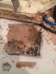 Mold Growing on Sheetrock