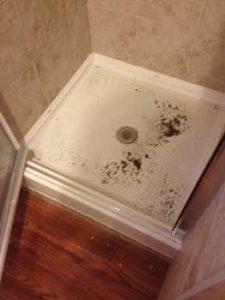 Sewer Backup in Shower