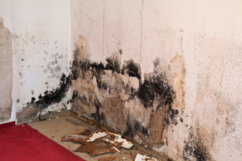 Mold Removal Bennett CO